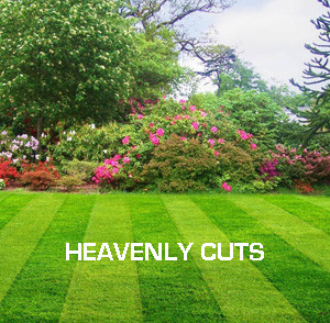 Heavenly Cuts Lawn Maintenance